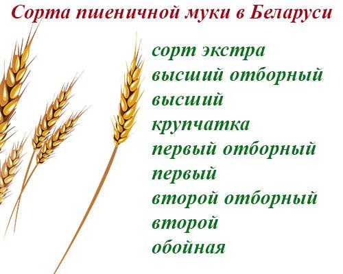 Сорта пшеничной муки в Беларуси