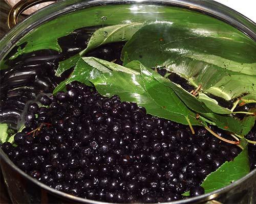 Вишневые листья и черноплодная рябина